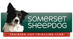 Somerset Sheepdogs